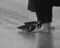 Sandales - Mal de Mer (5/6)